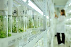 Skuteczność in vitro - poznaj fakty i dowiedz się, ilu parom można pomóc