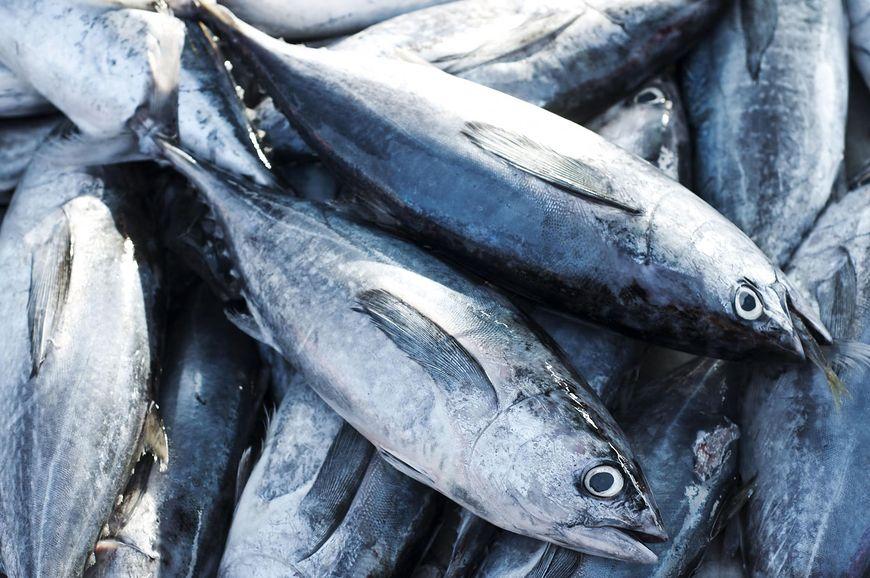 Metale ciężkie znajdziemy m.in w rybach