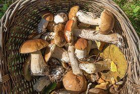 Grzyby - właściwości odżywcze. Czy grzyby są zdrowe? Które są jadalne, a które trujące?