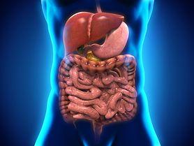Dwunastnica - funkcje, choroby (wrzody, zapalenie, refluks, nowotwór)