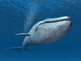 """""""Niebieski wieloryb"""" wciąga coraz więcej dzieci"""