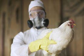 Pierwsze na świecie zakażenie człowieka wirusem ptasiej grypy H10N3. Czy grozi nam kolejna epidemia?