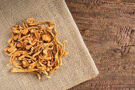 Cordyceps – właściwości, systematyka, działanie grzybów