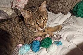 Kot Oli walczy z FIP. Jego właścicielka prosi o pomoc