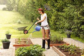 Jak zaaranżować ogród ekologiczny? (WIDEO)
