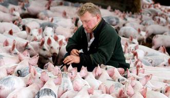 Wołowina już na szycie drożyzny. Ceny wieprzowiny i drobiu jeszcze wzrosną