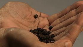 Dobroczynne właściwości czarnego pieprzu. Musisz je poznać (WIDEO)