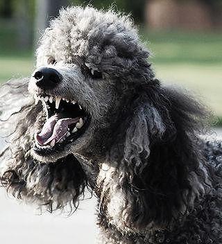 https://tripplehelix.net/cisco-uc-vulnerable-poodle-attacks/