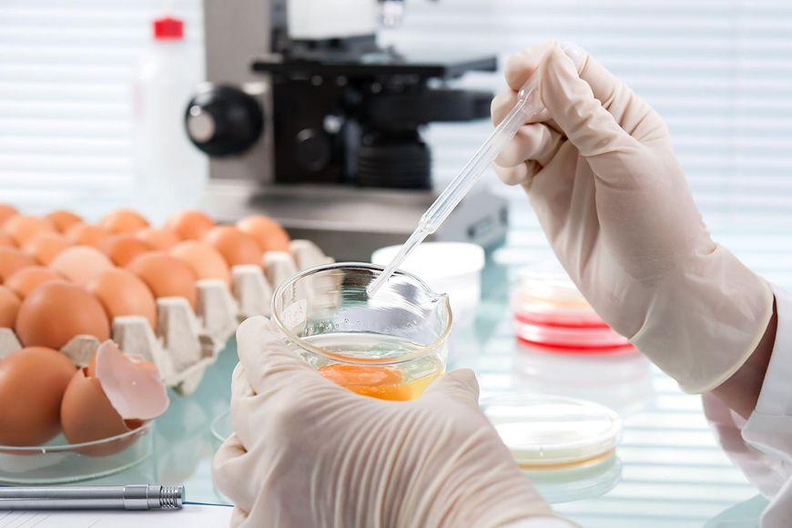 Bakterie - salmonella