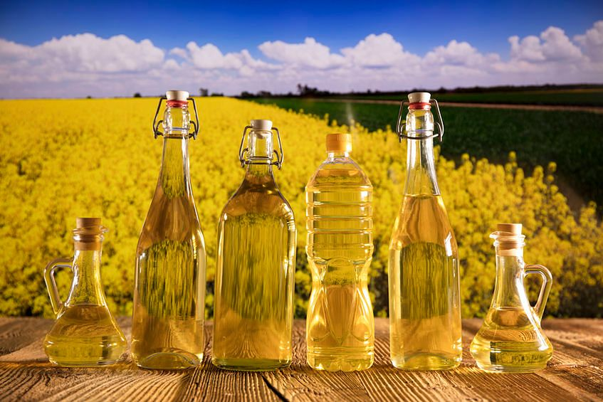 Olej rzepakowy budzi kontrowersje ze względu na modyfikacje genetyczne tej rośliny