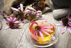 Niesamowity kwiat na odporność - jeżówka