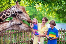 Atrakcje dla dzieci - Dolny Śląsk