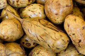 Owoc baobabu – właściwości odżywcze, zalety, baobab w diecie