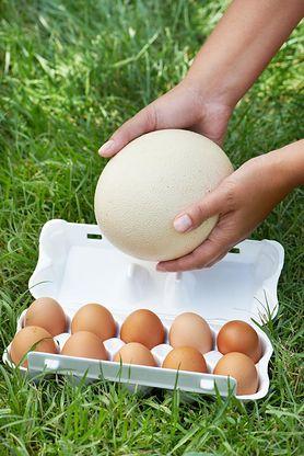 Najzdrowsze jajka. Kurze, kacze czy strusie?