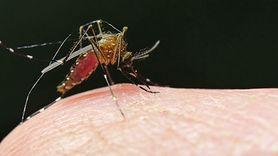 Ocet na komary i pająki. Skuteczna mikstura na odstraszenie owadów (WIDEO)