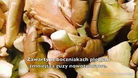 Prozdrowotne właściwości grzybów (WIDEO)