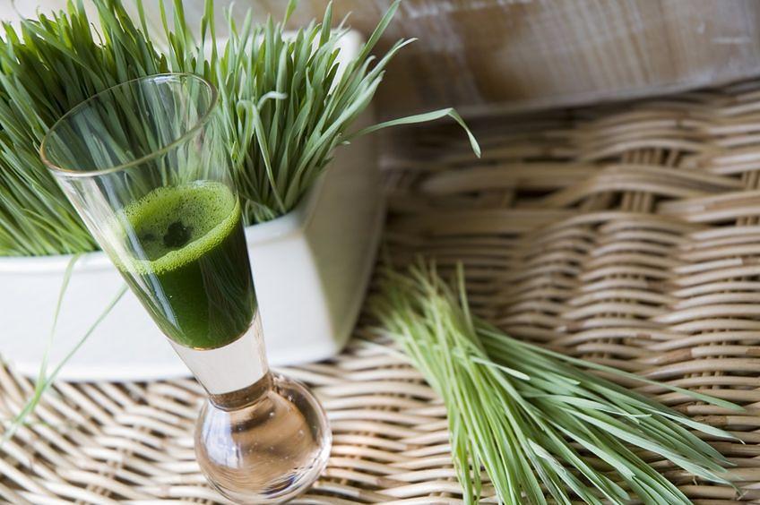 Trawa pszeniczna – zielone złoto