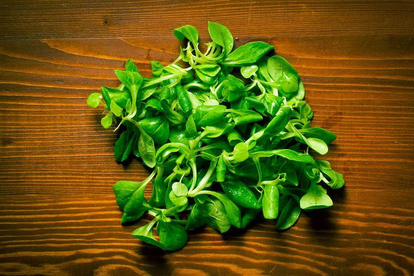 Roszponka – roślina baśniowa