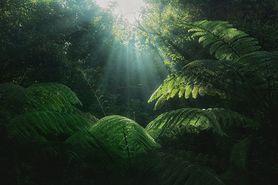 Fotosynteza. Czym jest i w jaki sposób przebiega?