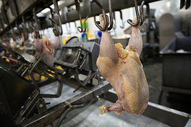 Ptasia grypa w Polsce. Czy powinniśmy szykować się na następną epidemię?