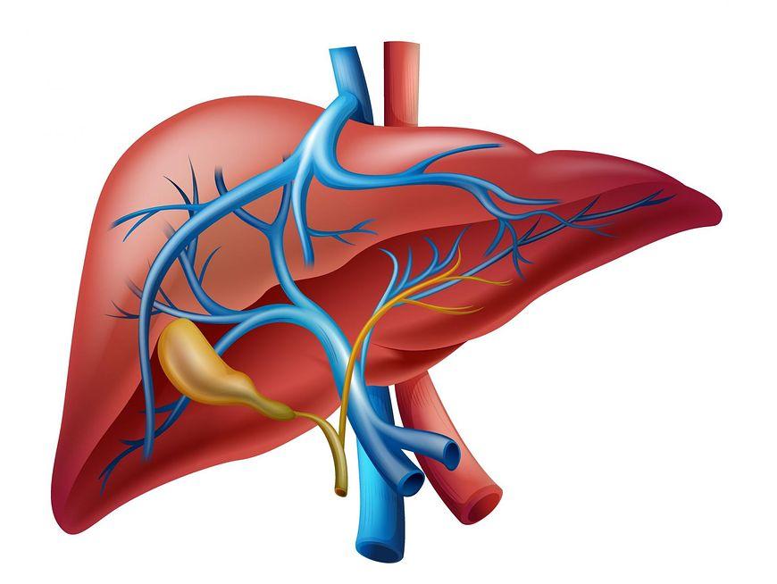 Bąblowica jednojamowa atakuje wątrobę i płuca