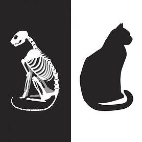 Kot Schrödingera - przebieg eksperymentu, kot w kulturze masowej