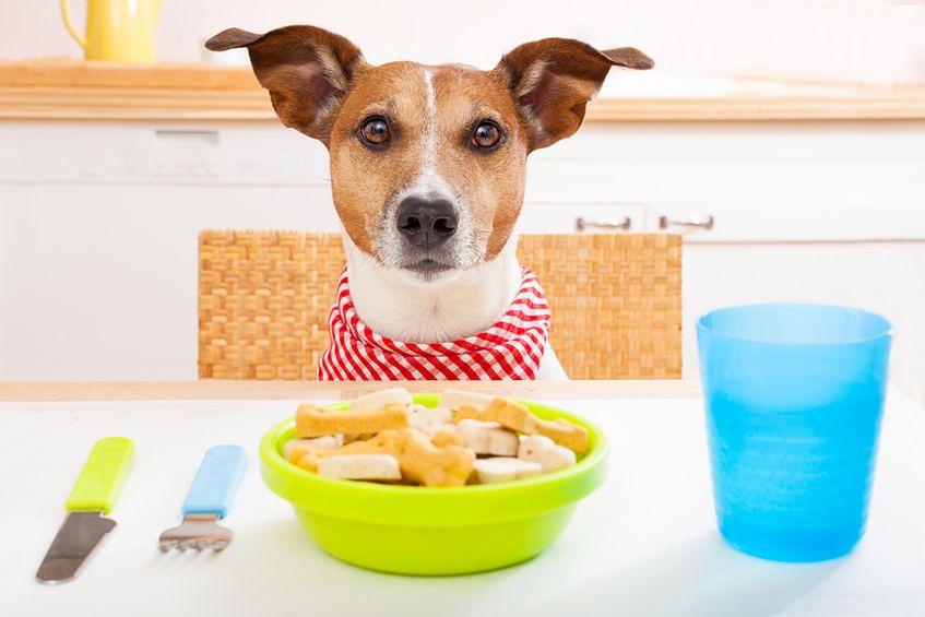 Psia dieta musi być zdrowa dla pupila