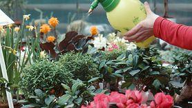 Woda z mlekiem do pielęgnacji roślin. Używaj jej regularnie (WIDEO)