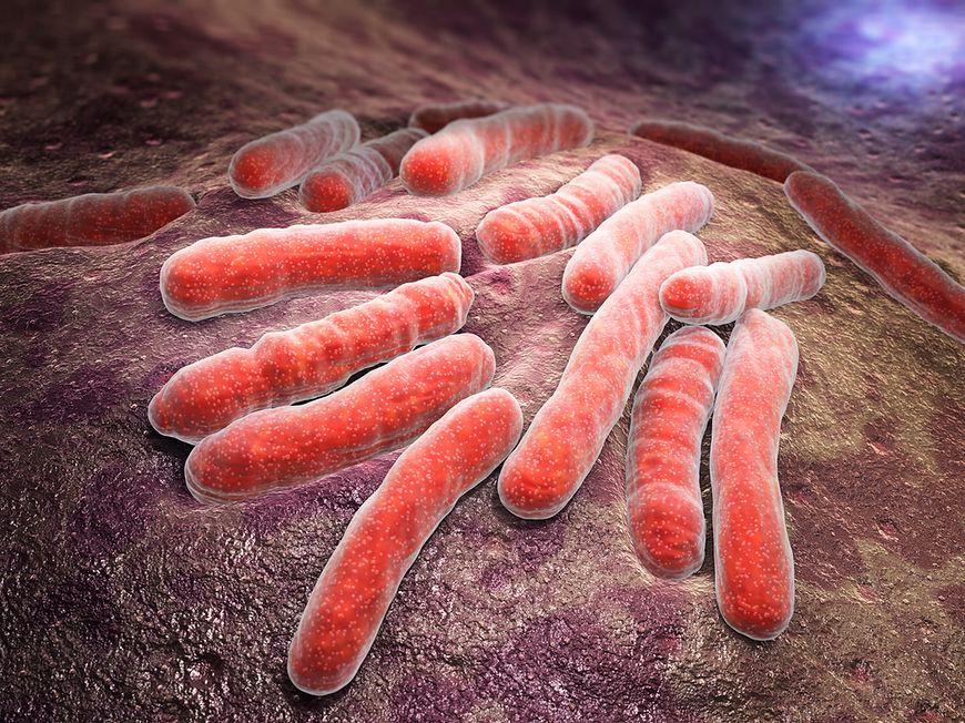 Pałeczki E.coli