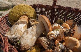 Które grzyby są najzdrowsze?