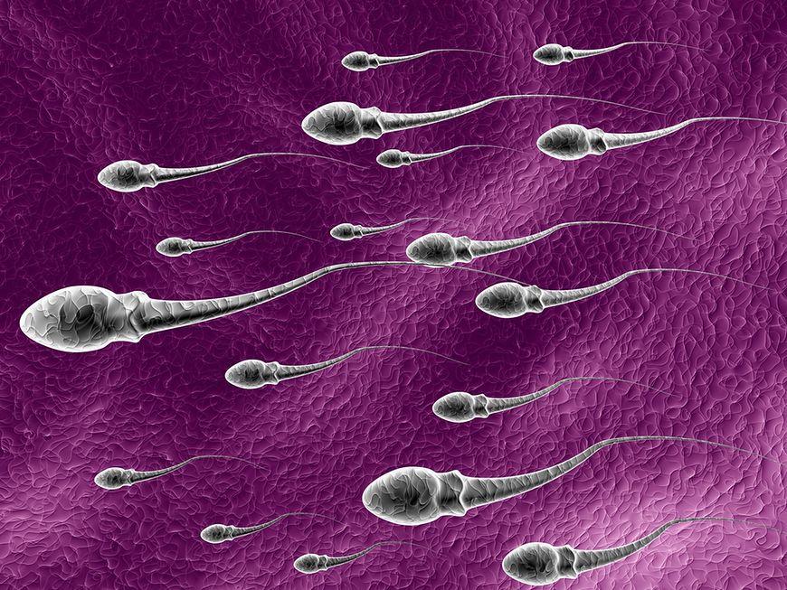 Średnia prędkość spermy podczas wytrysku wynosi 44,8 km/h