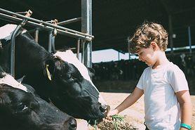 Dziecko zaraziło się bakterią E.coli karmiąc zwierzęta. Ma uszkodzoną nerkę