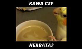 Kawa czy herbata? (WIDEO)