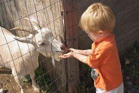 Dwulatek zmarł po wizycie w mini zoo