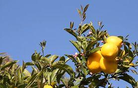 Co daje picie zagotowanej wody z cytryną? (WIDEO)