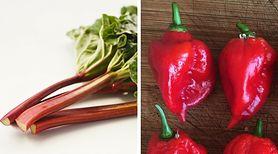 Oto 6 posiłków i produktów, które są niebezpieczne dla życia. Mimo , że są trujące, ludzie chętnie po nie sięgają