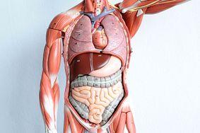 5 prostych sposobów na zregenerowanie wątroby