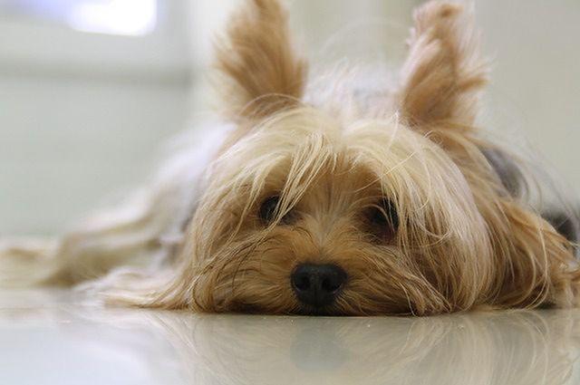 Zwierzaki oznaczają więcej zdrowia i szczęścia