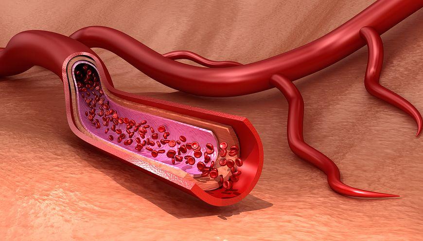 O przepływ krwi powinniśmy dbać niezależnie od wieku