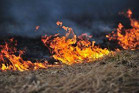 Zachęcają do wypalania traw. Czy tak można pozbyć się kleszczy?