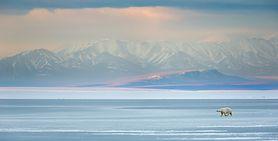 Arktyka – czym się wyróżnia ten wyjątkowy region? Lokalizacja, zwierzęta, temperatura