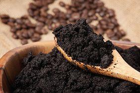 Fusy z kawy jako nawóz do kwiatków