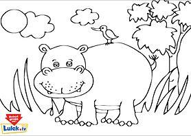Hipopotam - kolorowanka