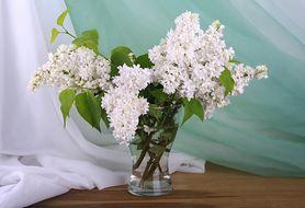 Pomysł na bukiet z kwiatów bzu. Postoi dłużej