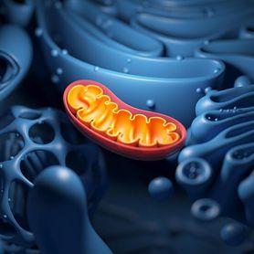 Mitochondria. Budowa i funkcje