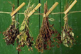 Najlepsze zioła na odporność