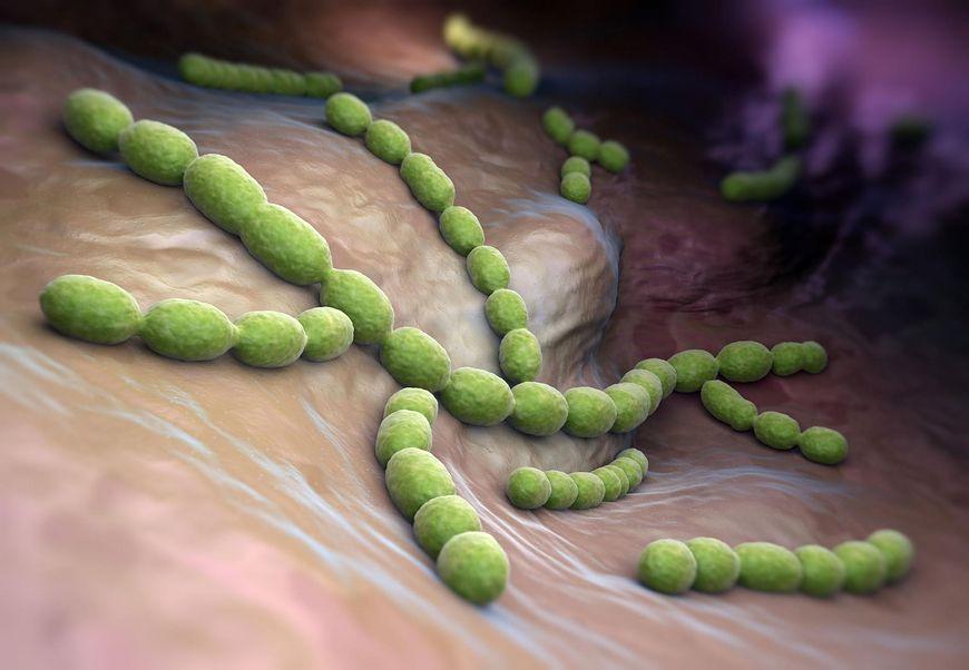 Bakterie - jakie choroby wywołują pneumokoki?
