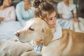 Labrador retriever. Jak opiekować się psami tej rasy?