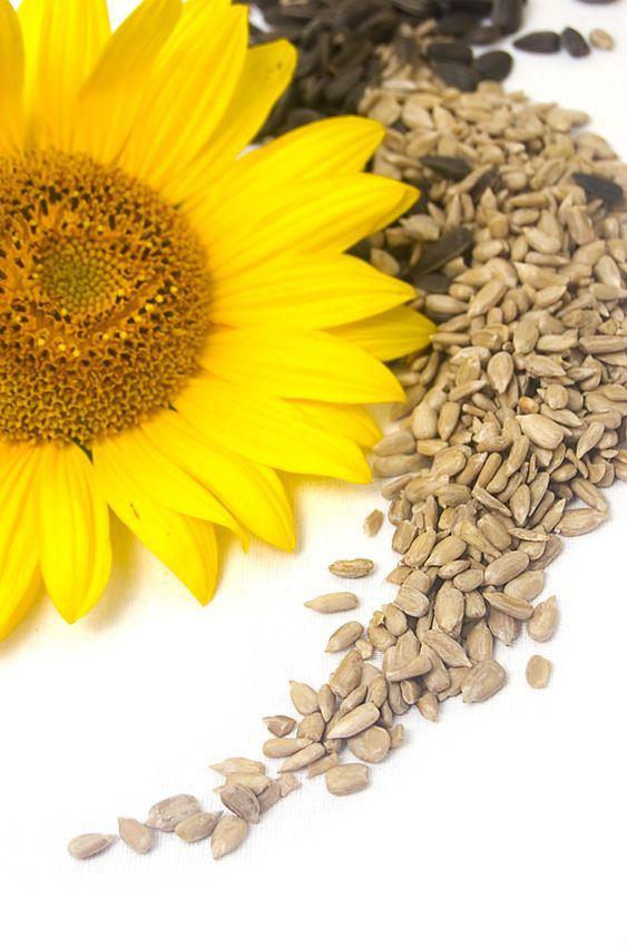 Dlaczego warto jeść pestki słonecznika?