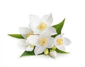 Roślina o działaniu uspokajającym. Warto mieć ją w sypialni (WIDEO)